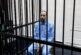 GNU frees Gaddafi's son after seven years in detention